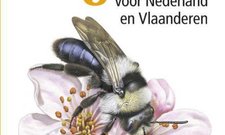 Veldgids Bijen
